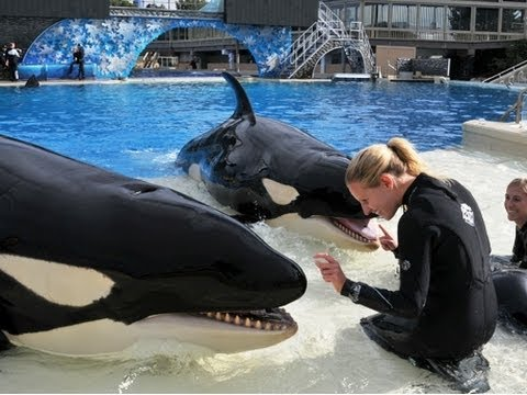 ♥♥ The Shamu Story at SeaWorld San Diego