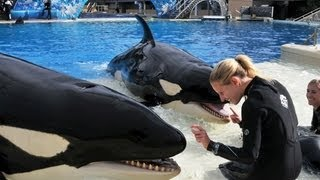 ♥♥ 2013 The Shamu Story at SeaWorld San Diego