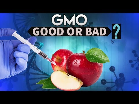 GM Mustard controversy- Genetically modified organisms - LMO