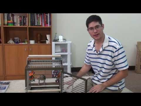 Parrot Travel Cage Assembly & Review