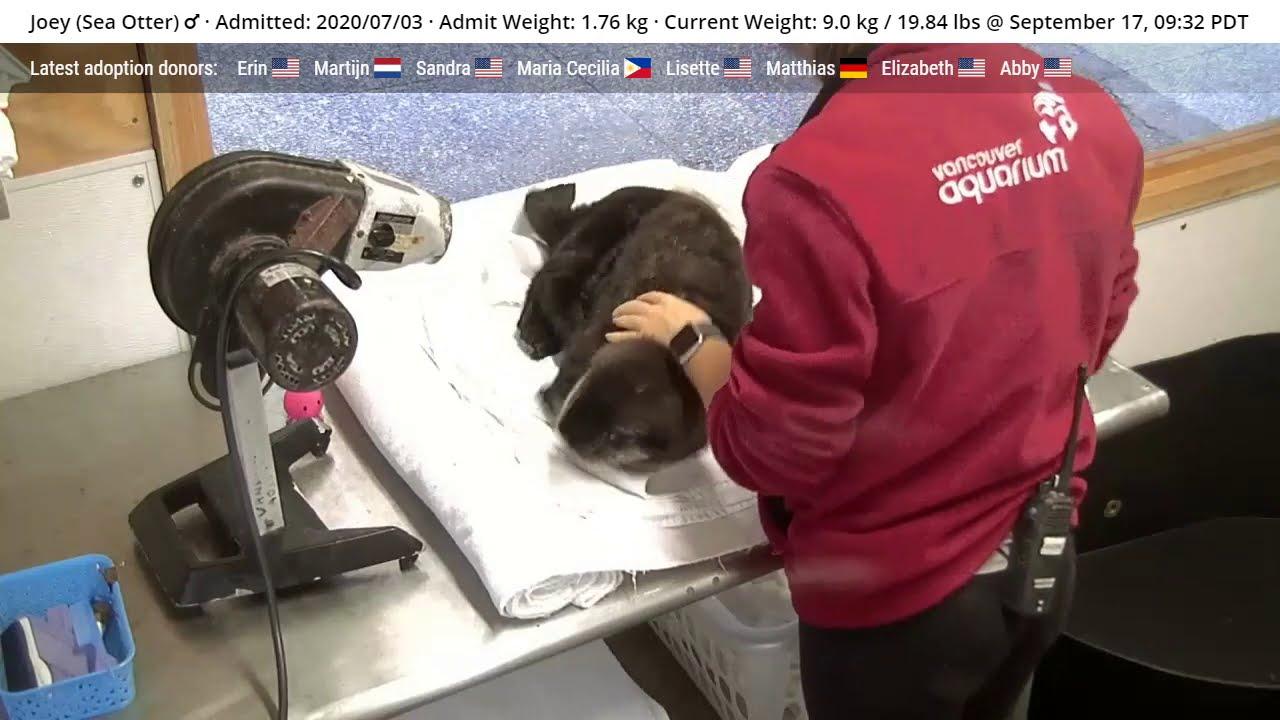 Joey and the Sea Otter Awareness Week Wiggle Marathon
