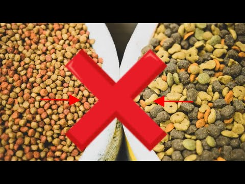 👉 If You Feed Labrador Retriever With Dry Dog Food ❌ Stop Immediately!