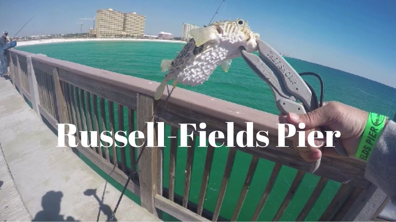 Saltwater fishing at russell fields pier panama city for Panama city beach pier fishing report