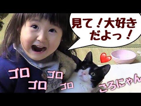 4か月ぶりに再会の子猫が、3歳娘を大歓迎!【猫さんとヒメちゃんはお友達】