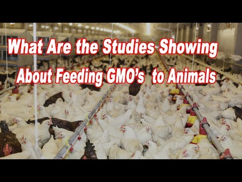 at-least-26-animal-feeding-studies-show-adverse-effects-from-gmo's-by-sheldon-krimsky
