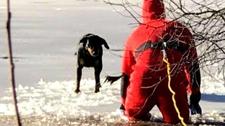 Firefighter Rescues Dog That Wandered Onto Icy Pond