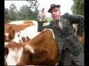 André van Duin - 35 Koeien