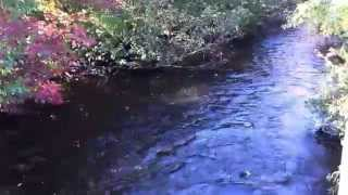 King salmon huge brown trout at oak orchard watch the for Oak orchard fishing report 2017