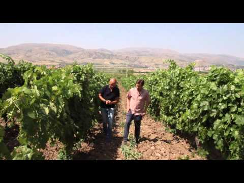 Ennio Gugliotta and Tina Lino of Vinkara Wines in Turkey