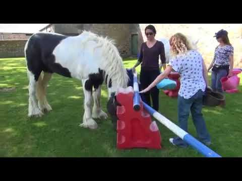 Animal Assisted Play Therapy™ Protecting Self Esteem Demo with Horses