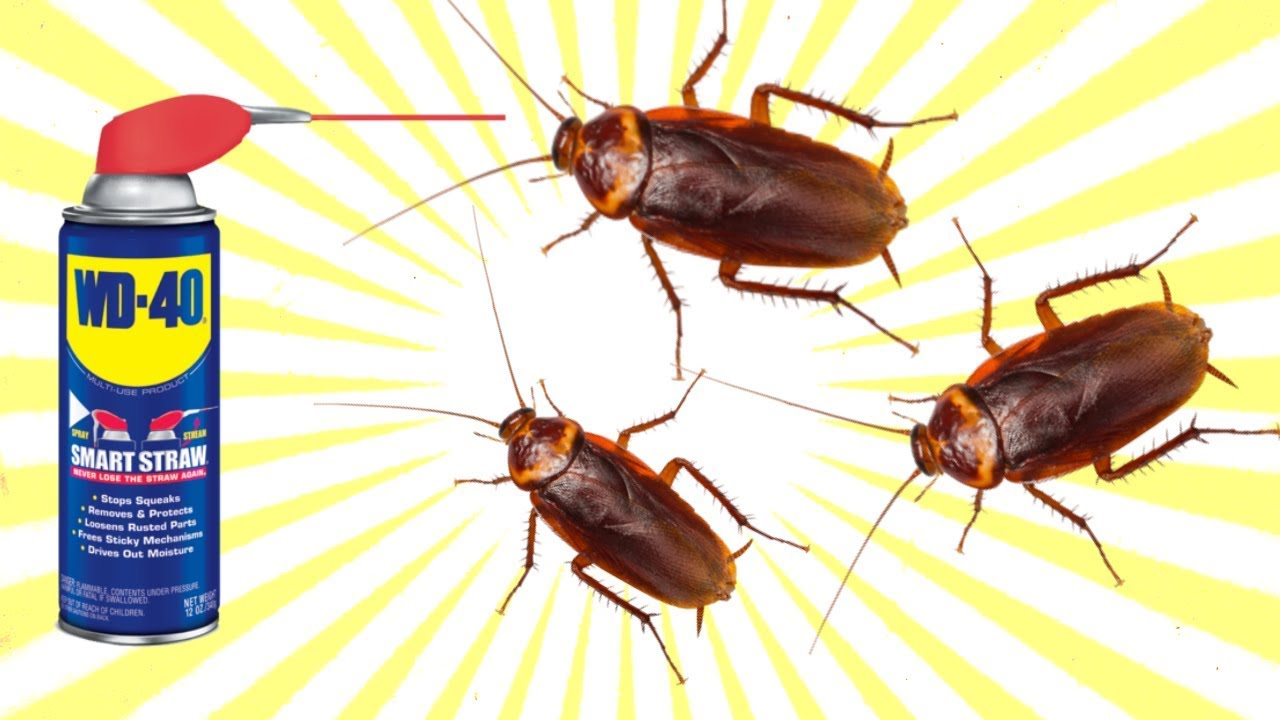 how to kill cockroach with wd 40 spray youtube. Black Bedroom Furniture Sets. Home Design Ideas