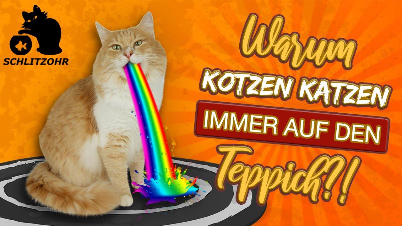 🔥Warum kotzen Katzen immer auf den Teppich? Lustiges