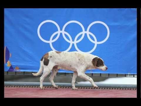Sochi Olympics - Stray Dogs PSA