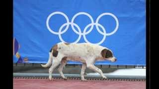 Repeat youtube video Sochi Olympics - Stray Dogs PSA