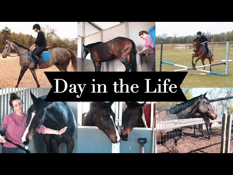 DAY IN THE LIFE: EQUESTRIAN COLLEGE STUDENT // Barn Vlog