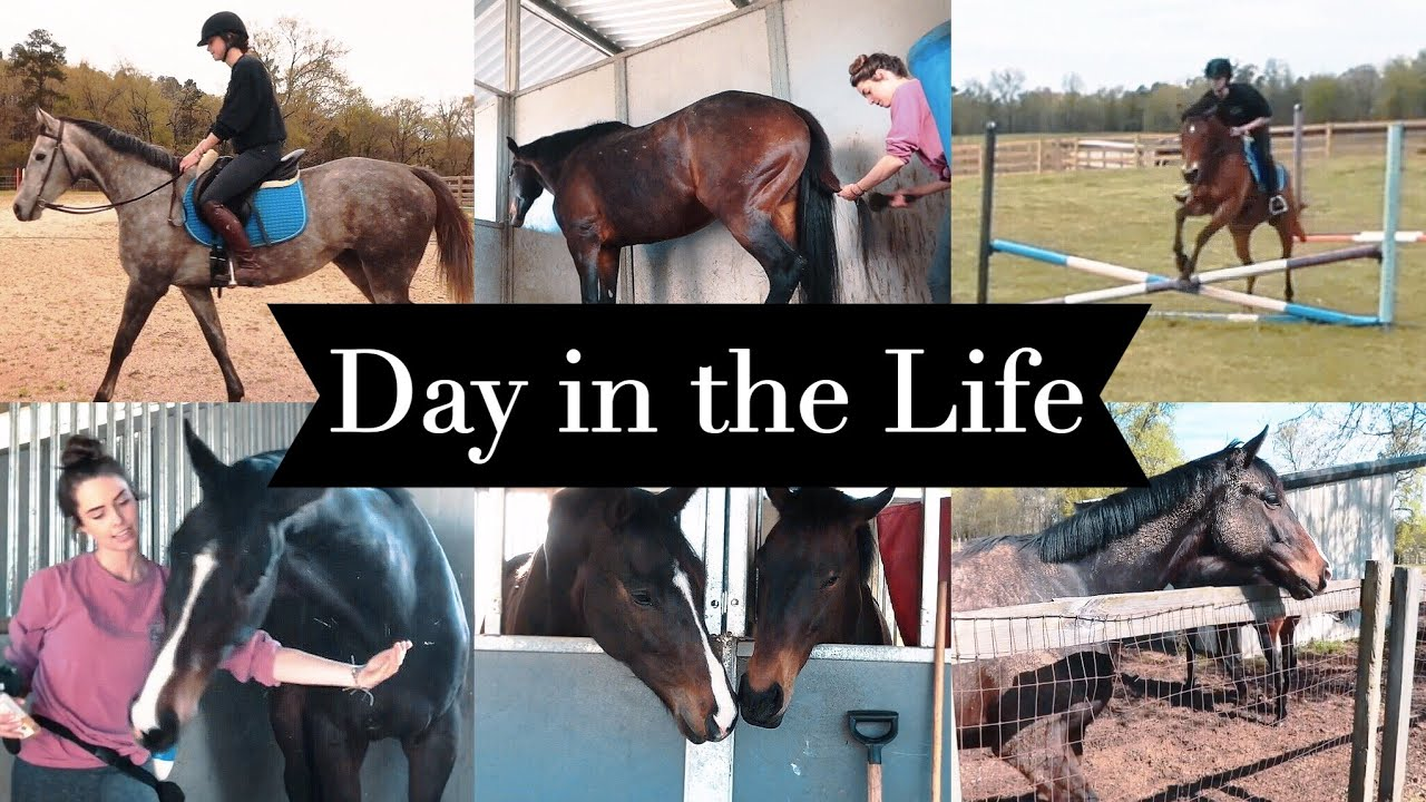 DAY IN THE LIFE: EQUESTRIAN COLLEGE STUDENT // barn vlog #15