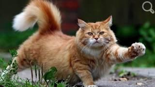 Сколько и как спят кошки  про кошек Забавные, смешные, любопытные коты Видео