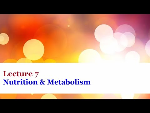 Lecture 7 Nutrition and Metabolism