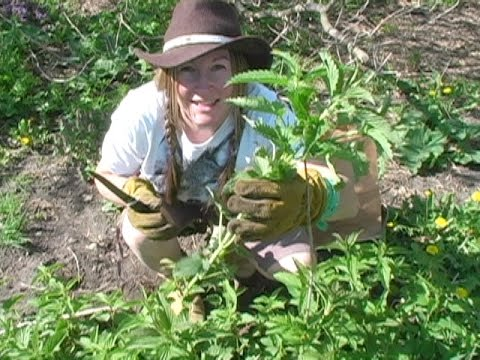 Survival Food- Stinging Nettles: Friend or Foe? With Brooke Whipple