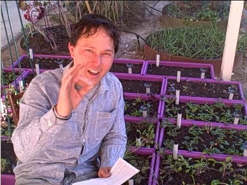 How to protect your plants from Pests using organic methods and other gardening Q&A