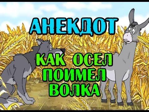 АНЕКДОТ ПРО ВОЛКА И ОСЛА, НОВЫЙ АНЕКДОТ...