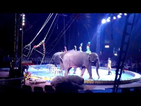 Circus Show - Oriental Circus Indonesia Margo City Depok Part 2 - Elephant & Bike Show