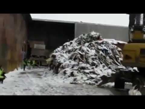 Тысячи крыс выбежали из норы