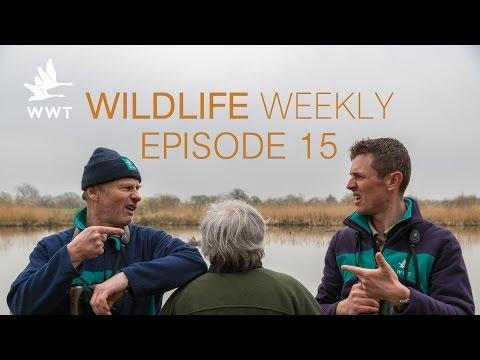 Wildlife Weekly Slimbridge - Episode 15 (Feat. Bill Oddie)
