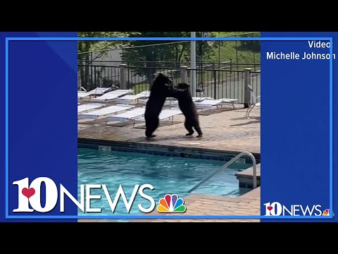 Family Of Bears Crash Great Smoky Mountain Pool Party