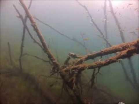 Northwest Divers - Crosby treasure hunt 2013