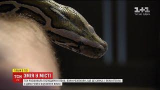 ТСН знайшла власника пітона, якого зняли з ліхтаря у Києві