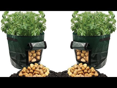 believe-it-or-not,-this-can-grow-tons-of-potatoes-in-a-trash-bag