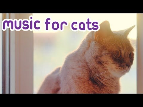Music For Cats: Help My Cat Won't Sleep! - Relax My Cat!