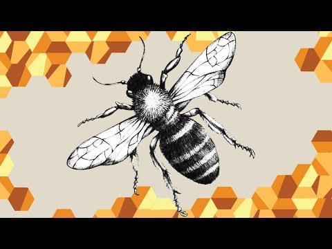 The Plight of the Honeybee - Queens In Trouble