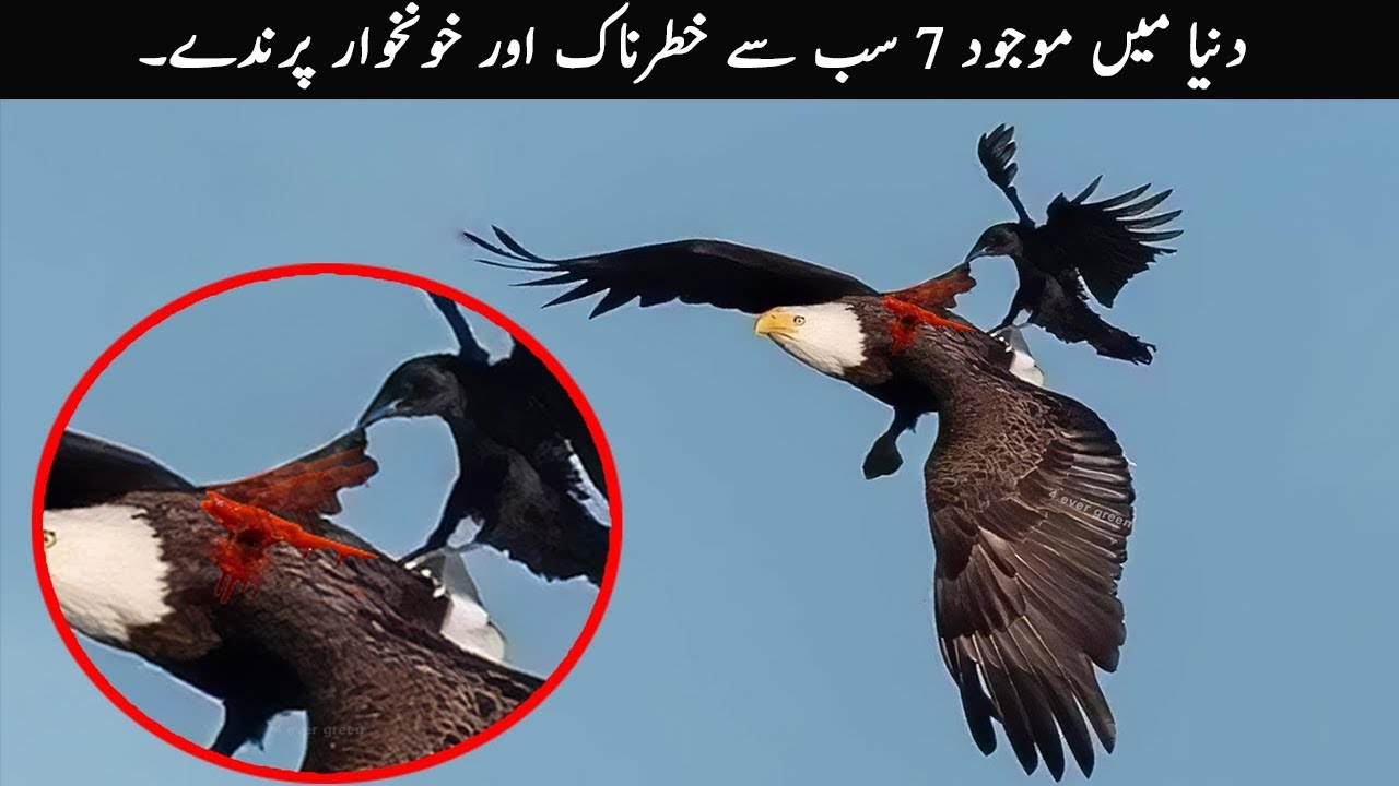 7 Most Fearless Birds in the World | TOP X TV