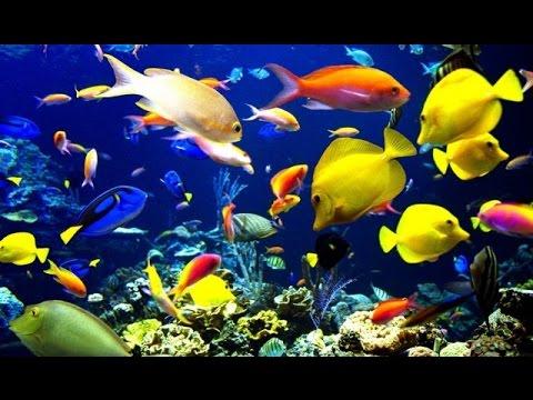 3 HOURS of Beautiful Fish, Relaxing Fish, Aquarium Fish ...