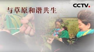 [中华优秀传统文化]与草原和谐共生| CCTV中文国际