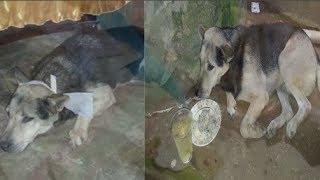 Cảm động câu chuyện chú chó đeo khăn tan và nguyện c.h.ế.t theo chủ