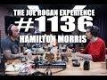 Joe Rogan Experience #1136 - Hamilton Morris