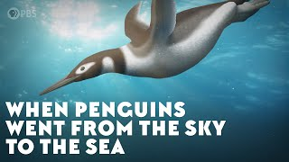 When Penguins Went From The Sky To The Sea