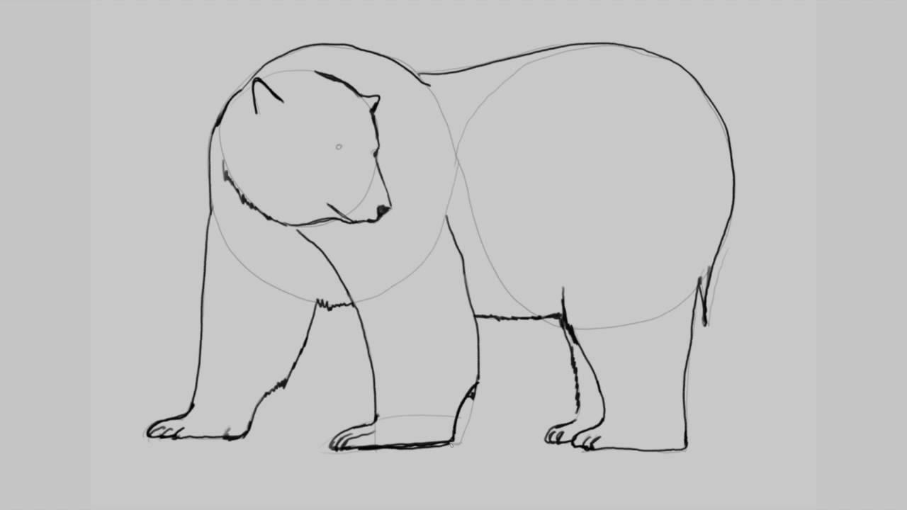 Como dibujar un oso polar. - YouTube