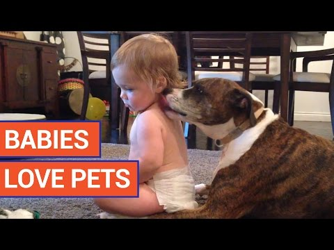 Cute Babies Love Adorable Pets Video 2017 | Daily Heart Beat