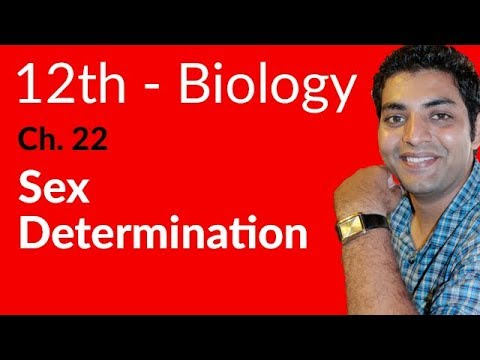 Sex Determination Biology - Biology Chapter 22 Variation and Genetics - FSC Part 2 Pre Medical thumbnail
