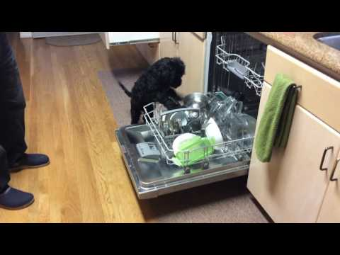 Cooper Does the Dishes