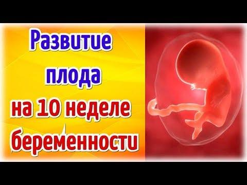 Развитие плода на 10 неделе беременности!