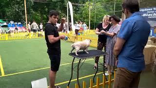 Выставка собак. Взгляд с изнанки.