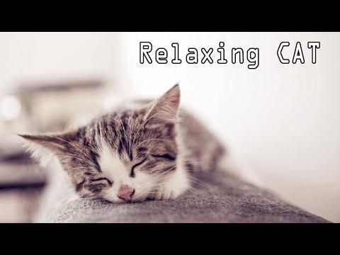 Tidur Kucing Musik - Relaxing