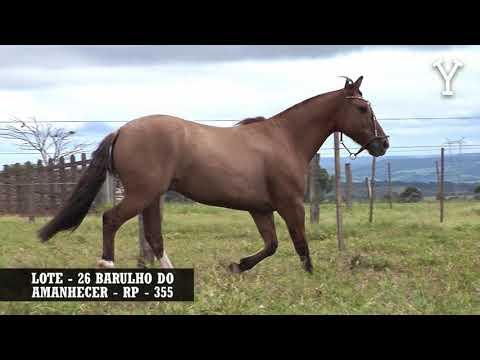 LOTE   26 BARULHO DO AMANHECER   RP   355