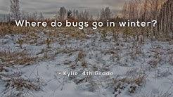 Where do bugs go in winter?