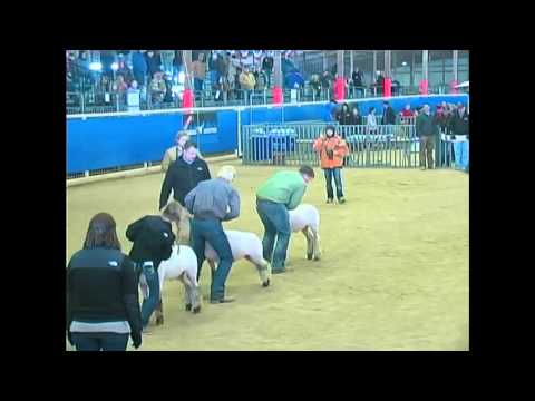 Junior Market Lamb Show- Broadcast - Competitive Events Rodeo Austin